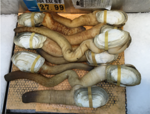 Photo of geoduck in the market