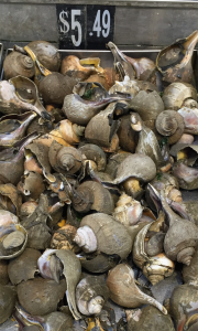 Photo of sea snails in the market